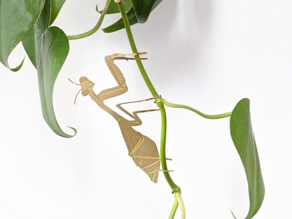 Mantis Plant friends